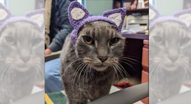 Lady ganhou orelhas de crochê