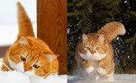O gatinho Ginger tem quase 70 mil seguidores em seu perfil no Instagram. O felino dá um verdadeiro show de fofura na Rússia, e agora já é conhecido em outras partes do mundo. Mas a vida do pet influencer não foi só ganhando likes enquanto deita e rola na neve. Veja