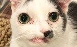 Pinocchio é um gatinho muito simpático que vem conquistando seguidores nas redes sociais. O felino foi abandonado por causa de uma deficiência congênita e resgatado por voluntários tempos depois. Dono de um olhar cativante, hoje ele vive ao lado de uma nova família. Conheça a história