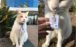 Depois de ficar por quase um ano fazendo rondas e visitas diárias aoHospital Epworth, em Richmond, na Austrália, o gatinho Elwood foi