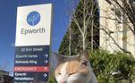 Chantel Trollip, uma patologista que trabalha no hospital, contou que o gato passa seus dias