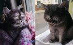 A gatinha Bean não teve um início de vida muito fácil. Por ter uma carinha rabugenta e o corpinho atarracado, esta felina quase ficou esquecida em um abrigo de animaisVeja também:Cão veste smoking para conhecer nova família que não apareceu