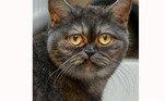 Franken conta que mandou mensagem para o abrigo a fim de saber se a gata ainda estava disponível. A resposta a surpreendeu