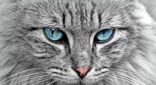 """Para os gatos, um """"piscar lento"""" é como um sorriso, disseram os pesquisadores"""