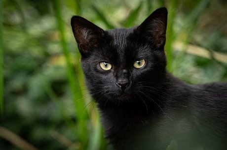Os proprietários de gatos também podem tentar replicar o experimento em casa