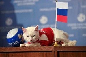 cadcca19dc475 ... Vale lembrar que o gato Achilles é praticamente um veterano na arte dos  palpites.