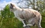 Dos 321 animais feridos por gatos e levados para o centro em 2019, apenas 89 sobreviveram. Os outros 232 são retratados na foto dele, mortosVEJA TAMBÉM: Fumaça de incêndios aumenta risco de morte por covid-19, diz estudo