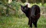 Apesar da foto chocante, ela não arranha a realidade. Estudos afirmam que gatos domésticos são uma das espécies mais predadoras do planeta