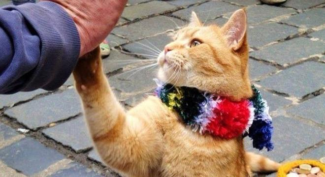 Além dos livros, o gato chegou a estrelar um filma em 2016