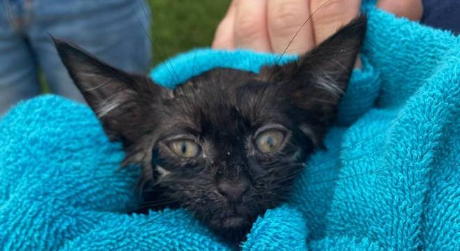 O pet foi resgatado todo molhado no fundo do bueiro