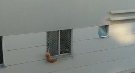 Animal ficou preso pelo rabo