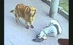 Não se sabe se as autoridades locais foram envolvidas, ou se fizeram alguma investigaçãoTambém não China, outro acidente do tipo foi marcante: um cachorro caiu do céu e atingiu uma chinesa em cheio. Relembre as imagens impactantes!