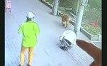 O gato levantou, aparentemente sem ferimentos, e caiu fora