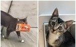 Um gatinho de oito meses foi passear pela vizinhança e voltou para casa com um pacote de guloseimas para felinos*Estagiária do R7, sob supervisão de Filipe Siqueira