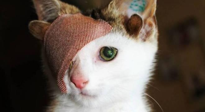 Frankie é um gatinho um pouco diferente