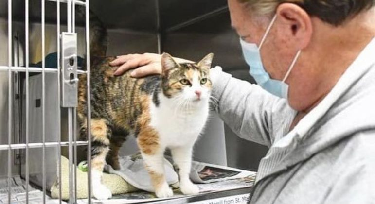 Gato foi encontrado a poucos metros de onde ficava sua antiga residência
