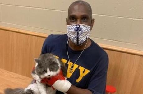 Dono reencontrou seu gato de estimação