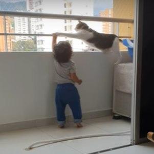 Gato tenta proteger bebê