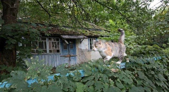Animais, como este gato, assumiram a Zona de Exclusão de Chernobyl desde que os humanos se afastaram