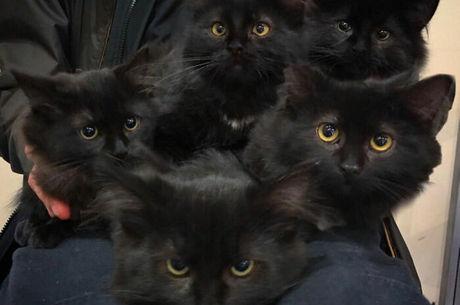 Todos os filhotes passaram pelo veterinário e foram colocado na adoção