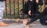 Após ser amparado por uma testemunha, o gatinho foi encaminhado para um abrigo de animais, onde recebeu os cuidados necessários