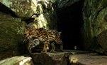 O tema Conservação de espécies/biodiversidade será apresentado na estação Fradique Coutinho (Linha 4-Amarela), de 3 a 30 de junho; na estação Moema (Linha 5-Lilás), de 3 a 30 de julho e na estação Oscar Freire (Linha 4-Amarela), de 4 a 31 de agosto (na foto, o gato-maracajá)