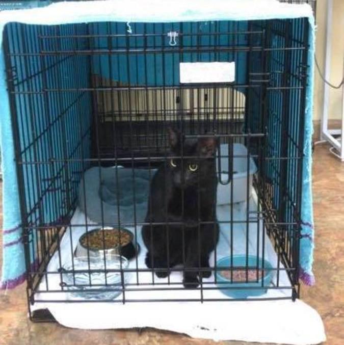 Binx estava em um abrigo e teve a família localizada após um post no Facebook