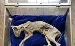 Um gato mumificado foi encontrado enterrado escondido dentro de uma parente. Detalhe: a descoberta foi feita em uma residência na Transilvânia, local famoso pelas histórias clássicas de Drácula