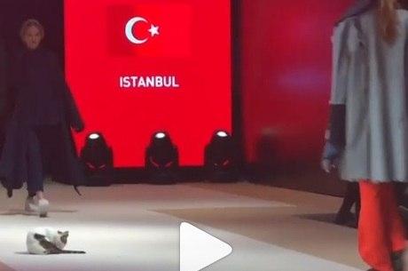 """Felino invade a """"catwalk"""" em desfile na Turquia"""