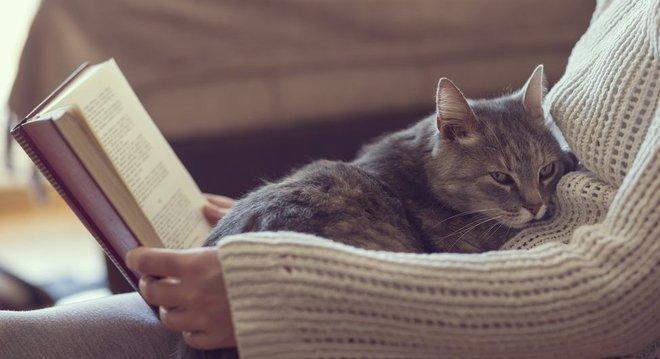 Doença não é motivo para se desfazer de gatos, afirmam especialistas