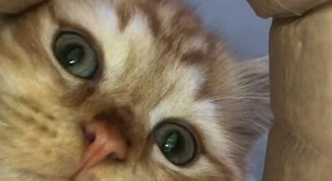 O gatinho curioso foi conferir o fundo da embalagem