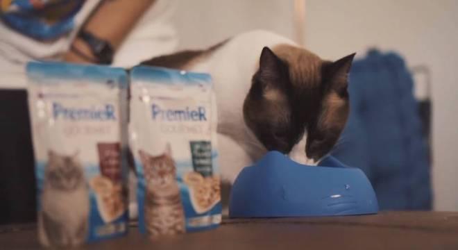 Gatos possuem necessidades diferentes, de acordo com sua faixa etária