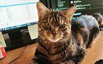 Em seu perfil nas redes sociais, Giggles já tem quase dois mil seguidores loucos para ver a nova versão do felino