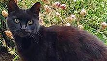 Gato mia sem parar, alerta vizinha e salva idosa que caiu em barranco