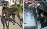 Um enorme e misterioso felino foi flagrado em frente a uma casa de Eastboure, na Inglaterra. O bicho era tão grande, que chegou a ser comparado a um dogue alemão— raça de cão mais alta do mundo, segundo o Guinness Book