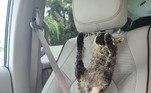 Jennifer, de 43 anos, encontrou o animal morto em uma estrada e decidiu que ele seria sua estreia no mundo da taxidermiaLEIA MAIS:Turista se livra de ataque de urso assassino com golpes de canivete