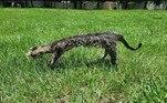A professora de artes Jennifer Clark, da Flórida, só queria fazer uma primeira obra de taxidermia com o corpo de um gato que ela encontrou na rua. Mas o resultado é esse aí: um bicho desengonçado e horrendo, que ela chamou de