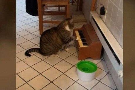 Gato começou a tocar o instrumento para aliviar o estresse