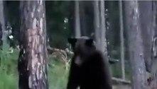 Gato corajoso encara e expulsa urso selvagem de acampamento