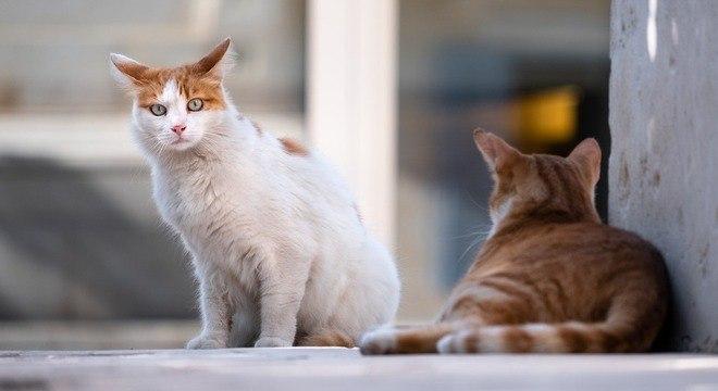 Rússia testa vacina contra covid-19 para gatos, coelhos, visons e outros animais