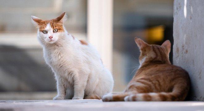 Brasil registrou o primeiro caso de coronavírus em uma gata