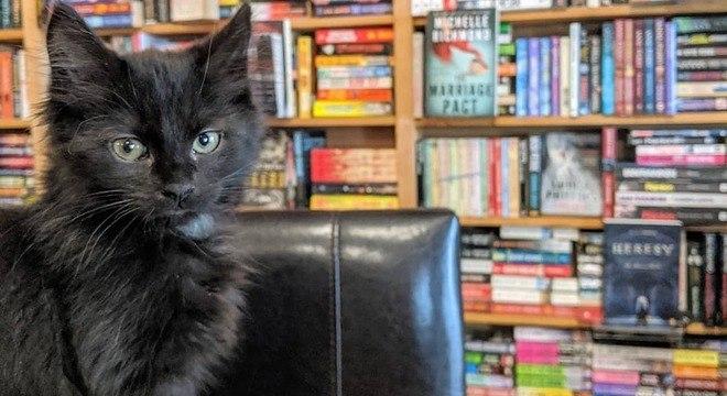 Gatos doentes transmitiram vírus para outros felinos não infectados