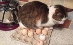 Chocando ovos