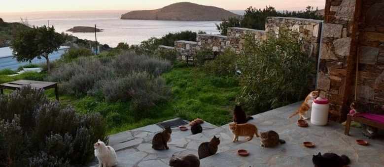 Foto do abrigo God's Little People Cat Rescue