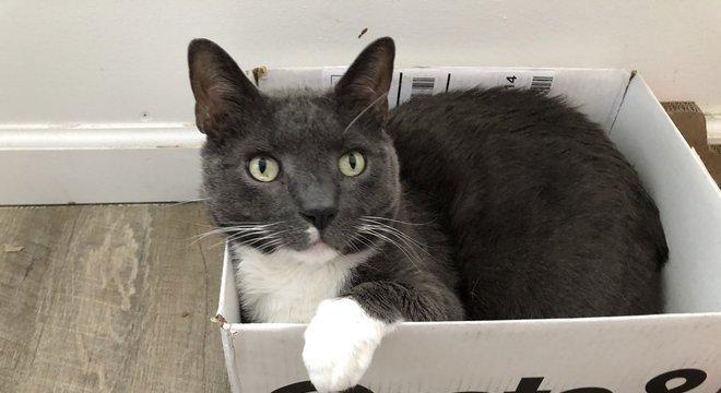 Segundo veterinários, não há provas de que gatos transmitam o coronavírus