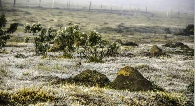 Geada atinge área conhecida como terreno da vaquinhas, em São José dos Campos (SP)