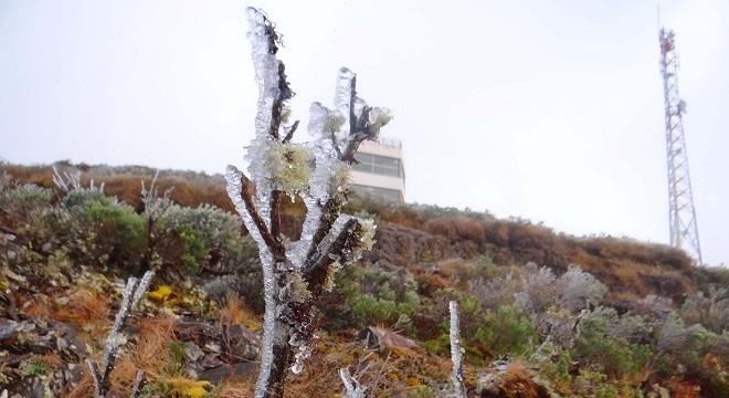 Vegetação amanheceu congelada no sul do país