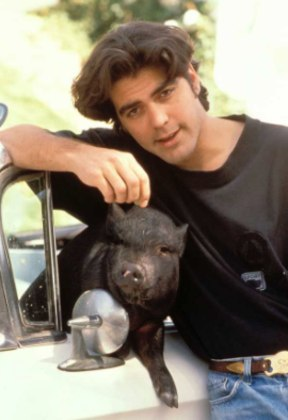 Clooney teve um animal de estimação bastante inusitado: um porco, que conviveu com o ator por quase duas décadas. Max, o suíno, e o ator formaram uma das mais fofas e improváveis duplas de Hollywood. Infelizmente, Max morreu aos 19 anos