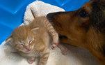 Um dos gatinhos, inclusive, segue com a 'mãe', pois a colega de quarto da pessoa que a adotou se apaixonou por ele!