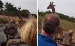 Uma girafa 'sangue nos olhos' decidiu perseguir um veículo com turistas, que faziam safári em uma reserva natural da região deMasai Mara, no Quênia